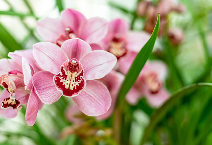 Close-up shot of a pink and red orchid