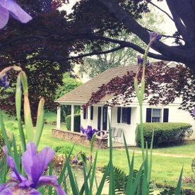 The Pond House seen through vibrant purple flowers