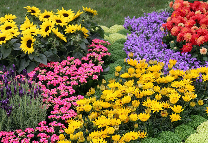 Colorful flower variety