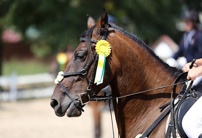 Horse racing in Pennsylvania ribbon