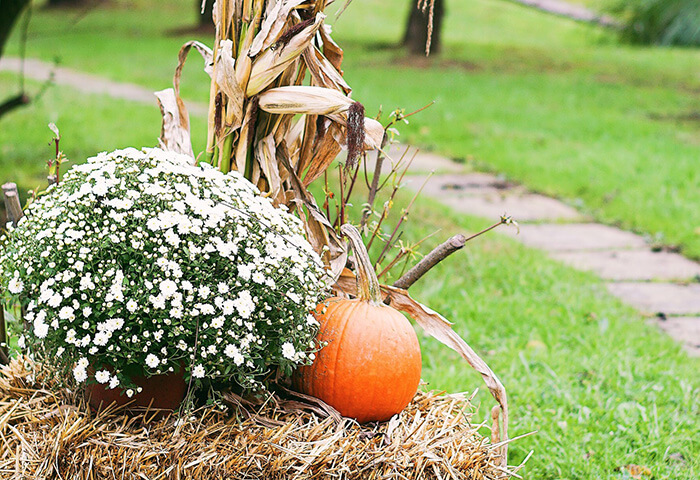 Pumpkin by flower bush and corn stalk