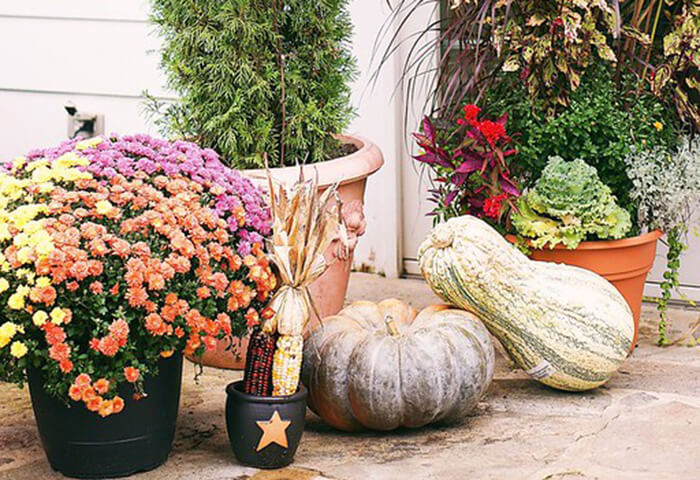 Collection of gourds and fall flowers