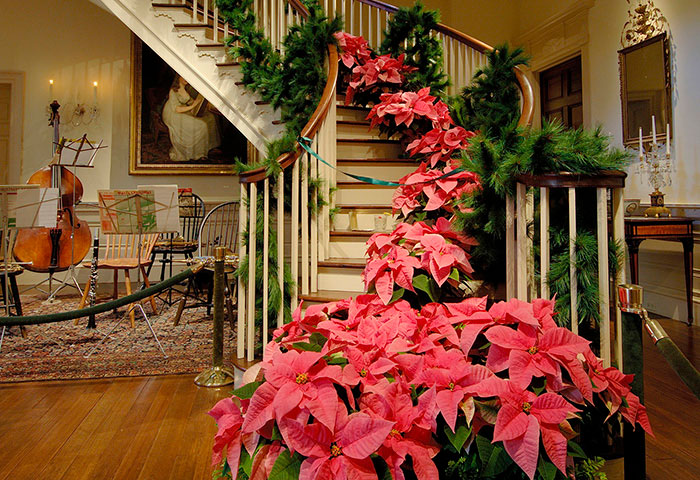 Poinsettias and pine boughs in a staircase display at the Winterthur's Yuletide Celebration