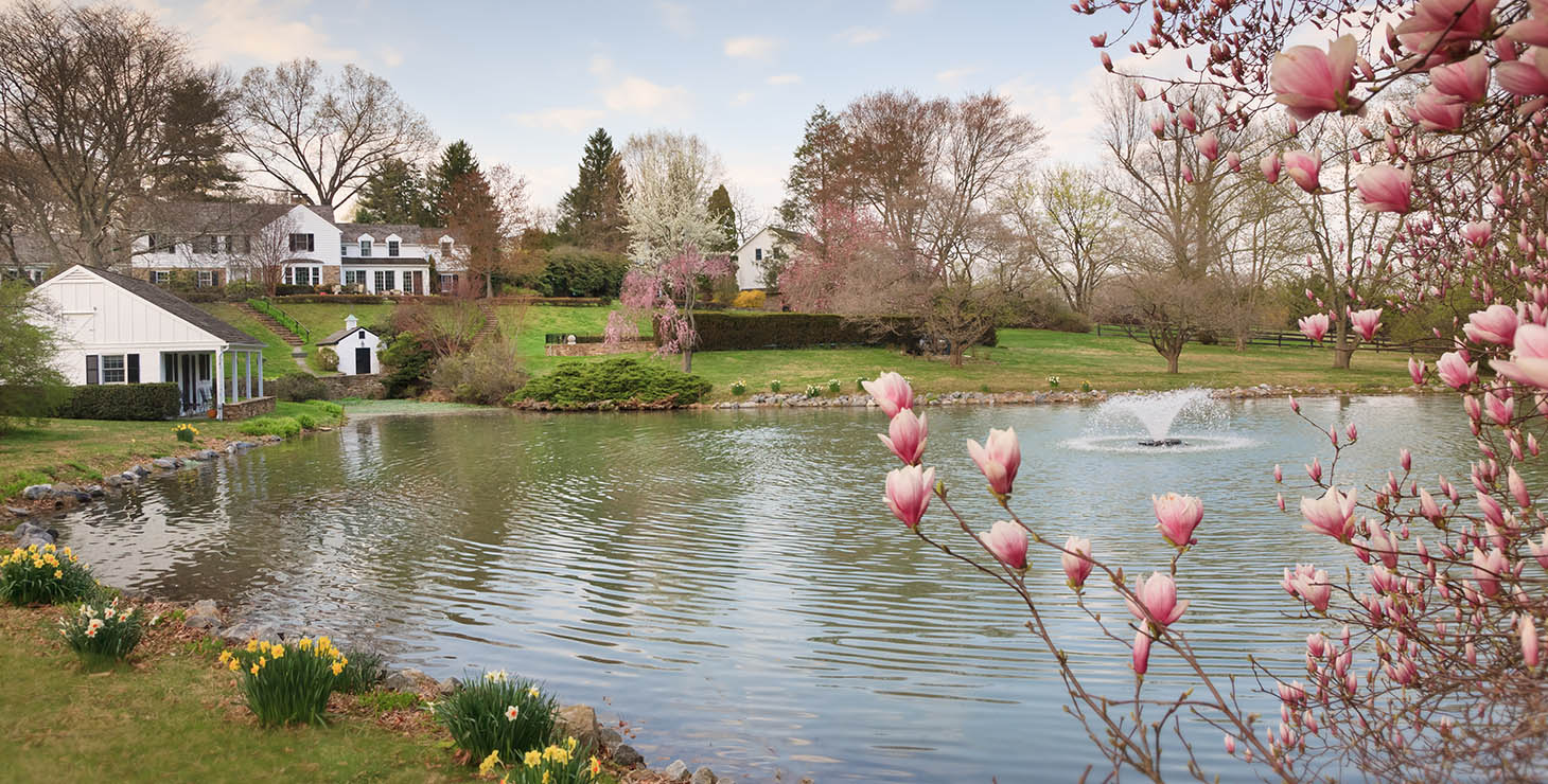Lake outside the Inn at Whitewing Farm, with a flowering pink tree in the foreground